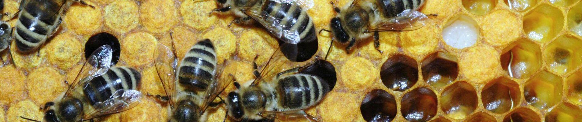 הרמת כוסית לראש השנה  – הרצאה מקצועית בנושא דבורים- אדם- אדמה- עולם