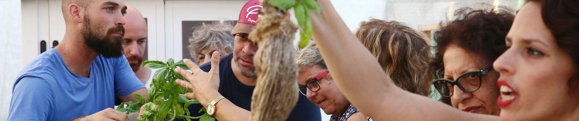 סדנת חקלאות אורבנית – גידול ירקות ללא אדמה