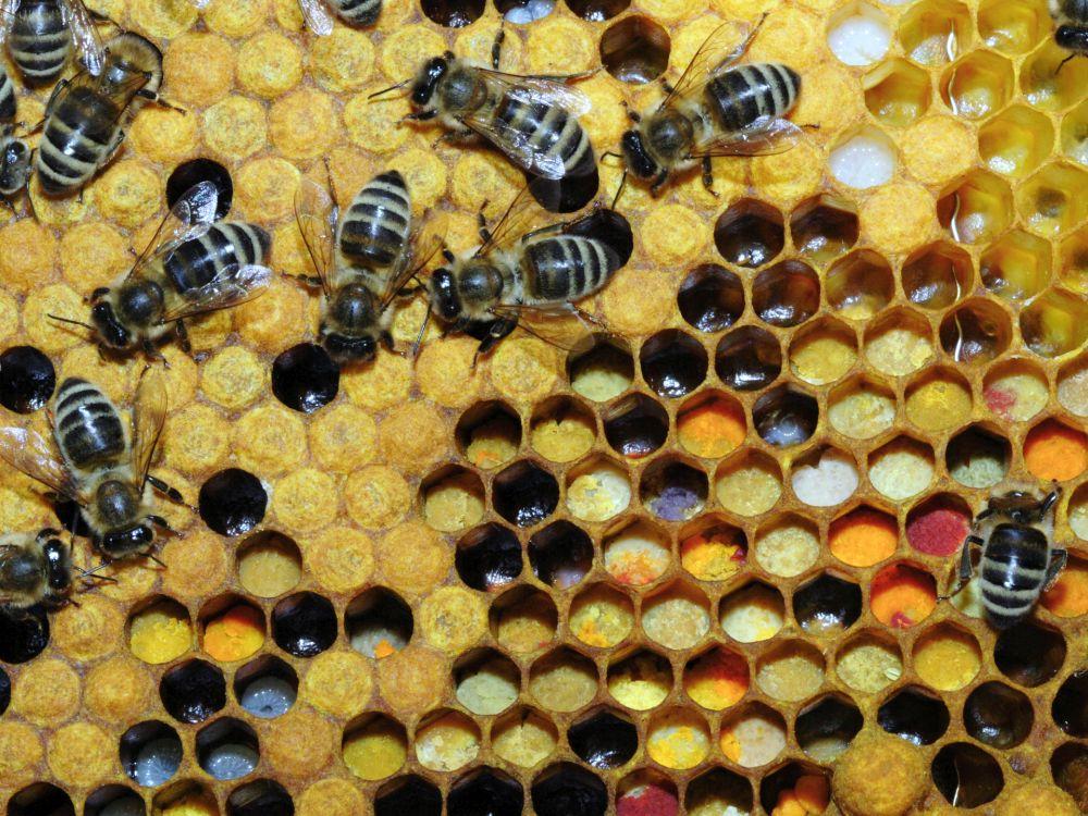 סיור בכוורות הדבורים שעל גג הסנטר